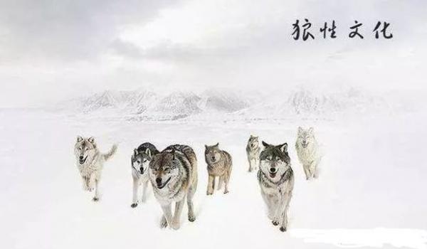 「狼性」的圖片搜尋結果